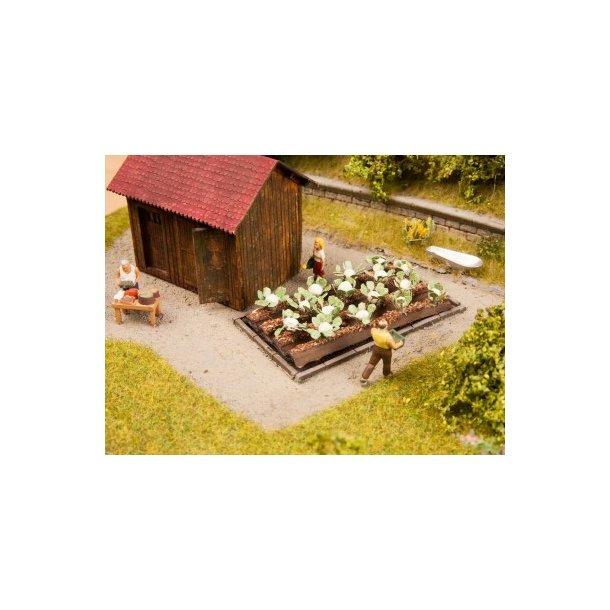 13216 NOCH Blomkål, 16 planter. H0