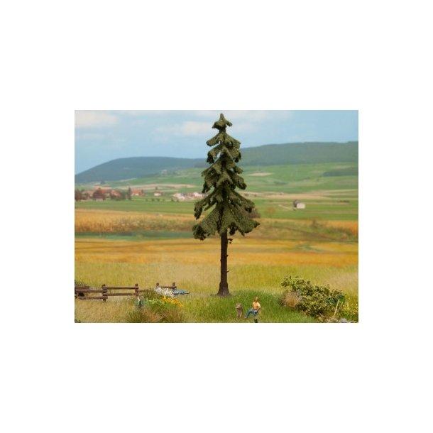 21924 NOCH Opstammet grantræ.