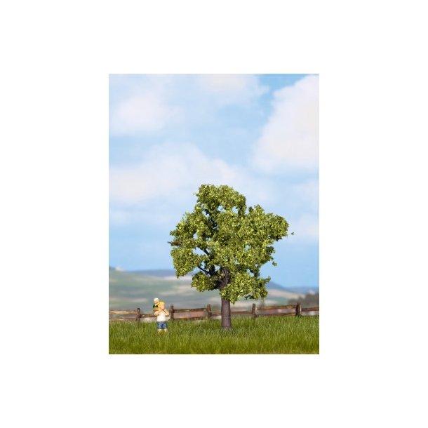 21550 NOCH Frugttræ.