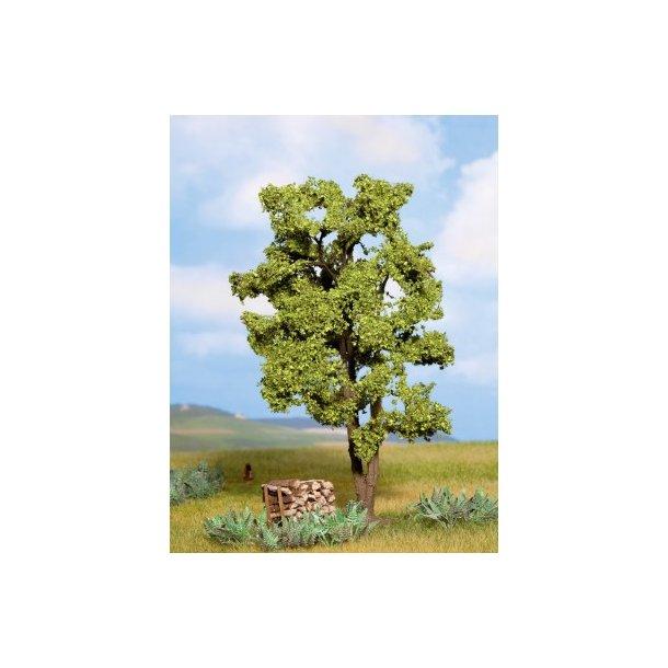 21660 NOCH Akasie træ.