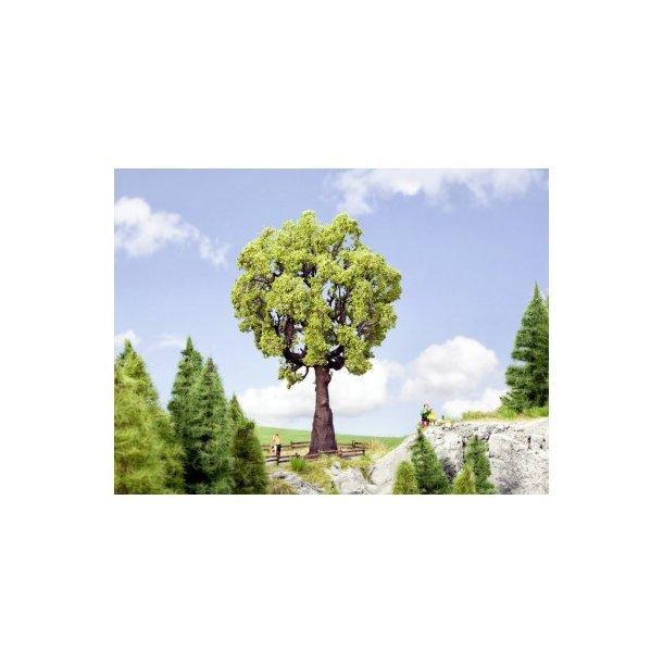 21761 NOCH Egetræ.