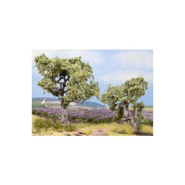 21995 NOCH. Oliventræer.